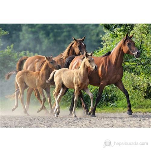Castorland 2000 Parça Puzzle Purebred Arabians