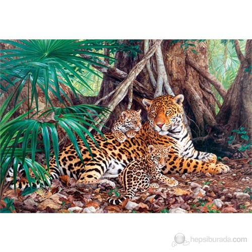Castorland 3000 Parçalık Puzzle Jaguars İn The Jungle