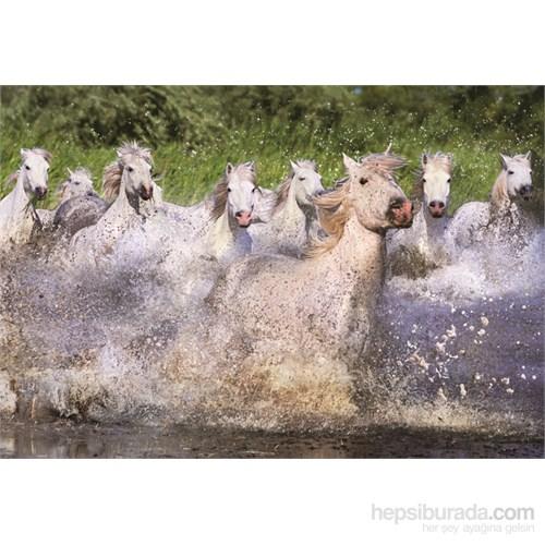 Educa 1000 Parça White Camargue Horses Puzzle