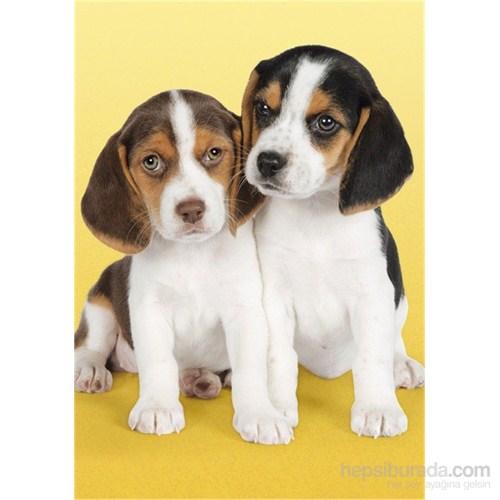 Clementoni Nice Beagles - 500 Parça Puzzle