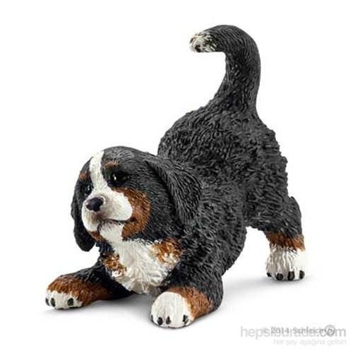 Bernese Dağ Köpeği Yavru