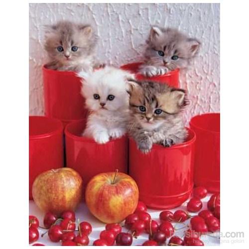 Cherry Cats, Cris Nikolson