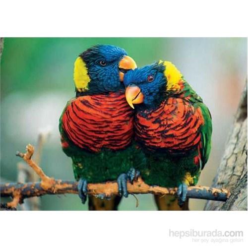 Parrots (500 Parça Puzzle)