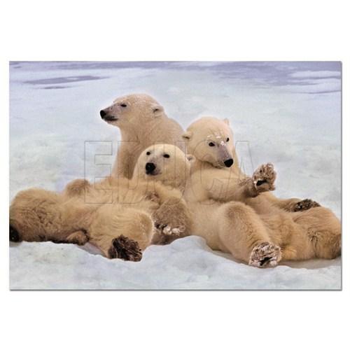 Educa Puzzle Polar Bears (500 Parça)