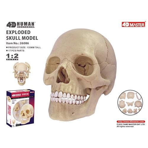 4D Master Kafatası (1:2)