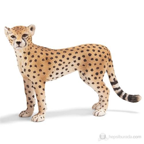 Schleich Çita Dişi