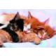 Educa Puzzle Kittens 500 Parça Puzzle