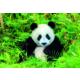 Educa Puzzle Panda Bear 500 Parça Puzzle