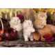Grafika 2000 Parçalık Persian Cats Puzzle