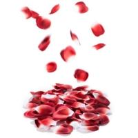 Bijoux Indiscrets Rose Petal Explosion Kokulu Gül Yaprakları