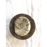 Ammonit Fosilli Dekoratif Mücevher Kutusu