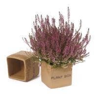 I Love Home Plant Box Saksı Seramik Küçük ( 1 adet )