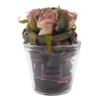 Casa di Mona Cam Saksı İçinde Doğal Malzemeler İle Dekore Edilmiş Yapay Çiçek