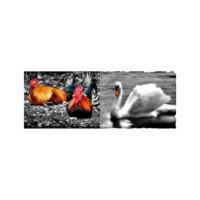 ARTİKEL Beautiful Animals 2 Parça Kanvas Tablo 60x40 cm KS-457