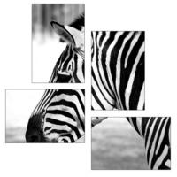 Tictac Design Zebra 4 Parça Kanvas Tablo 5