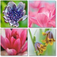 Fotocron Macro Flowers 4'lü Tablo