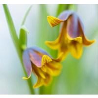 Fotocron Dekoratif Tablo Sarı Çiçek