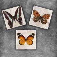 Oscar Stone Butterfly 2 Magnet