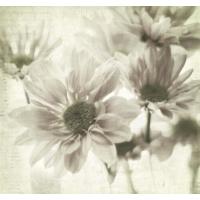 Fotocron Beyaz Papatyalar Tablo