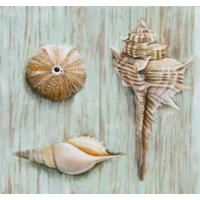 Fotocron Deniz Taşları-3 Tablo