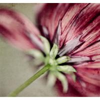 Fotocron Çiçek Kökü Tablo