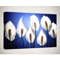 Kanvas Tablo - Çiçek Resimleri - C133