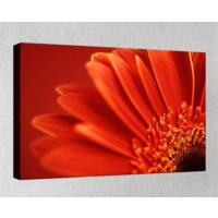 Kanvas Tablo - Çiçek Resimleri - C154