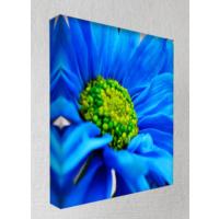 Kanvas Tablo - Çiçek Resimleri - C157