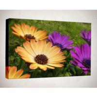 Kanvas Tablo - Çiçek Resimleri - C179