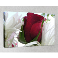 Kanvas Tablo - Çiçek Resimleri - C189