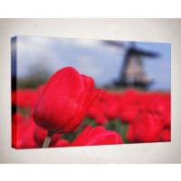 Kanvas Tablo - Çiçek Resimleri - C197
