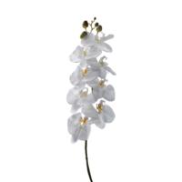 Tekdal Beyaz Orkide