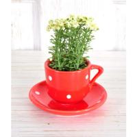 Tabaklı Kahve Fincanı Çiçek