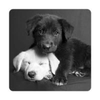 Fotografyabaskı Labrador Yavruları Bardak Altlığı Baskı 4'lü Set