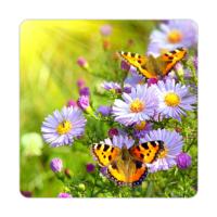 Fotografyabaskı Kelebekler ve Çiçekler Bardak Altlığı Baskı 4'lü Set