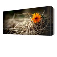 Dekor Sevgisi Nostalji Çiçek Canvas Tablo 45x30 cm