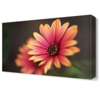 Dekor Sevgisi Pembe Sarı Çiçek Tablosu 45x30 cm