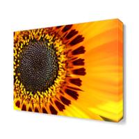 Dekor Sevgisi Ay Çiçeği Tablosu 40x40 cm