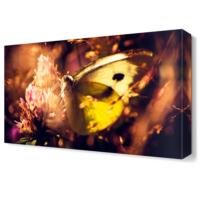 Dekor Sevgisi Renkli Kelebek Tablosu 45x30 cm
