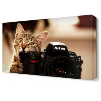 Dekor Sevgisi Fotoğraf Mankinasını Isıran Kedi Tablosu 45x30 cm