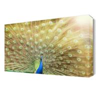 Dekor Sevgisi Kanatlarını Açan Tavus Kuşu Tablosu 45x30 cm
