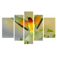 Dekor Sevgisi Renkli Kuş 2 Tablo 84x135 cm