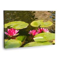 Fotografyabaskı Pembe Lotus Tablosu 75 Cm X 50 Cm Kanvas Tablo Baskı