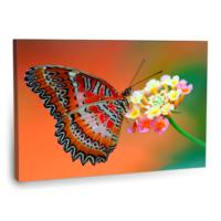 Fotografyabaskı Kelebek Ve Çiçek Tablosu 75 Cm X 50 Cm Kanvas Tablo Baskı