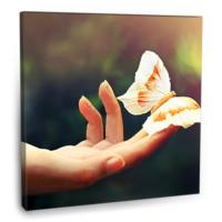 Fotografyabaskı Beyaz Kelebekler Tablosu 70 Cm X 70 Cm Kanvas Tablo Baskı