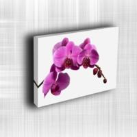Doku Canvas Baskı Çiçek- CIGE651