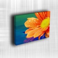 Doku Canvas Baskı Çiçek- CIGE568