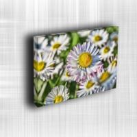 Doku Canvas Baskı Çiçek- CIGE557