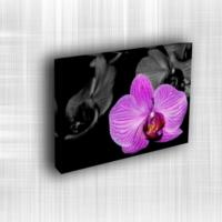 Doku Canvas Baskı Çiçek- CIGE047