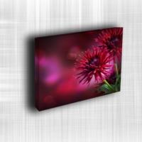 Doku Canvas Baskı Çiçek- CIGE552